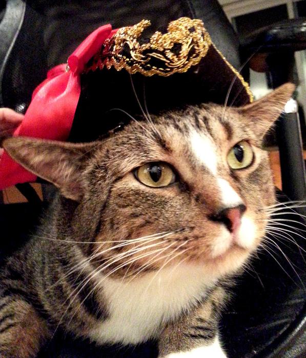 Вы - пират.